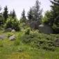 Природа около Селимица, Витоша
