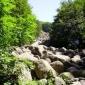 Ливада над Селимица, Витоша